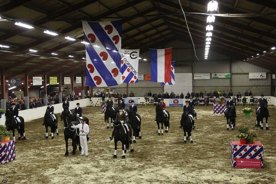 Hengstenshow PSV de Oorsprong